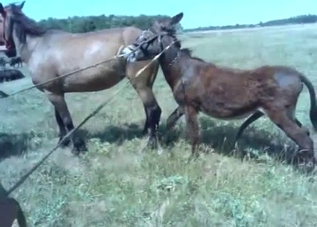 Sweet small pony is trying to fuck the bigger one